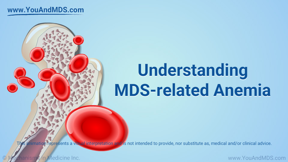 Animation - Understanding MDS-related Anemia