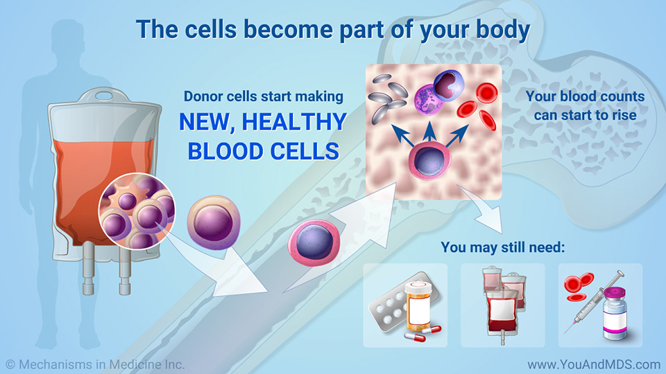 The cells become part of your body
