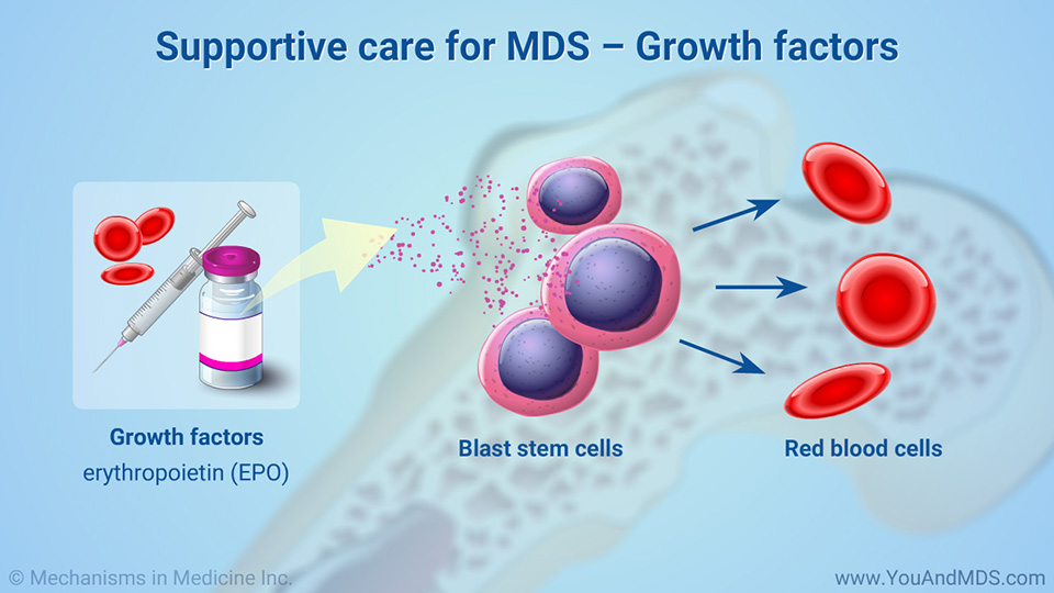 Supportive care for MDS – Growth factors