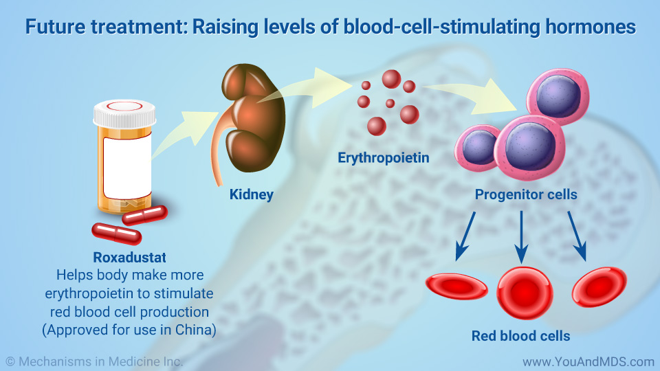 Future treatments: Raising levels of blood-cell-stimulating hormones